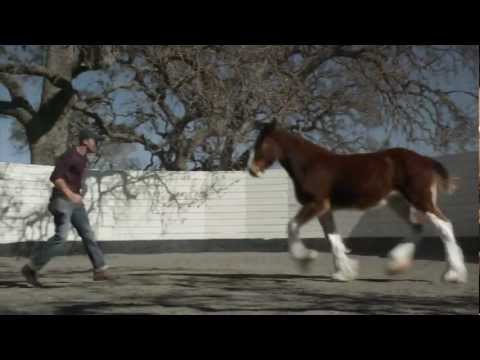 2013 Official Super Bowl Commercials  ( Budweiser - The Clydesdales)
