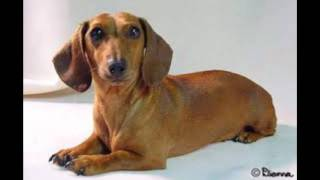 Top 10 Dog Breeds Of 2012