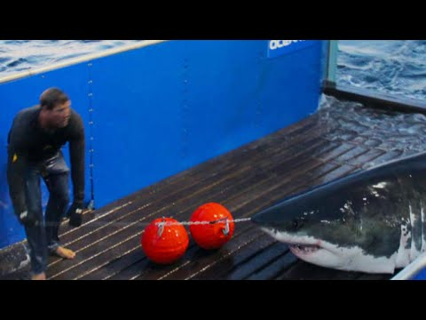 Shark resarcher on what we can learn from great whites