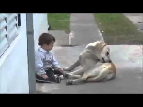 Labrador e bambini, una piccola grande storia