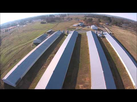 Cullman County Poultry & Cattle Farm