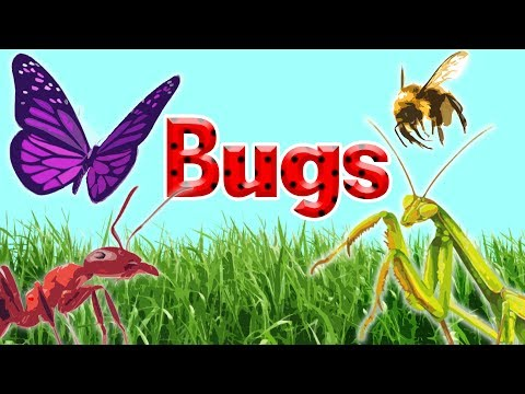 10 Interesting Insects    Insects for Kids     Bugs for Kids
