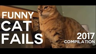 Best compilation of the funniest cat fails in 2017. Try not to laugh or grin at these cute cats.