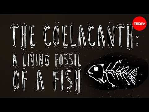 living - View full lesson: http://ed.ted.com/lessons/the-coelacanth-a-living-fossil-of-a-fish-erin-eastwood The coelacanth, a prehistoric fish that was mistakenly thought to have gone extinct at the...