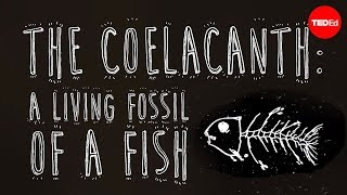 The coelacanth: A living fossil of a fish – Erin Eastwood