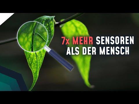 Pflanze zeigt menschliche Eigenschaften! Was bedeutet das?