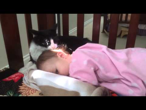 Your daily dose of cute! A cat grooming a baby