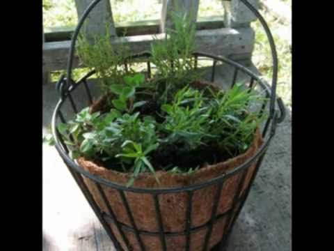 Growing Herbs for Beginners With Containers