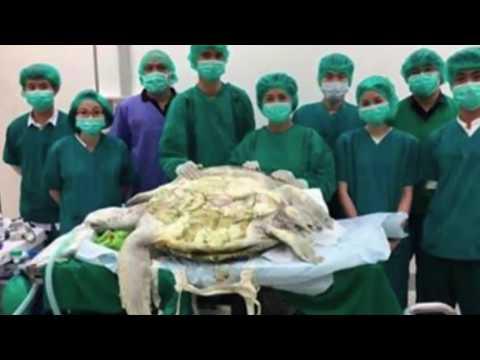 Mjekët e operojnë urgjentisht dhe ajo që ata gjejnë në barkun e saj është e tmerrshme për të gjithe (видео)