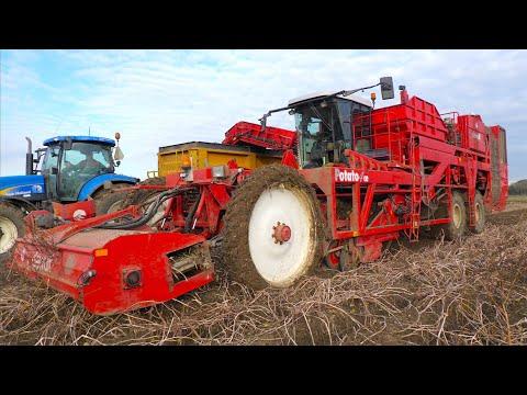 Potato Harvest | 2004 Dewulf Potato4CE [Force] | Only 3 built | Lakwijk Agro