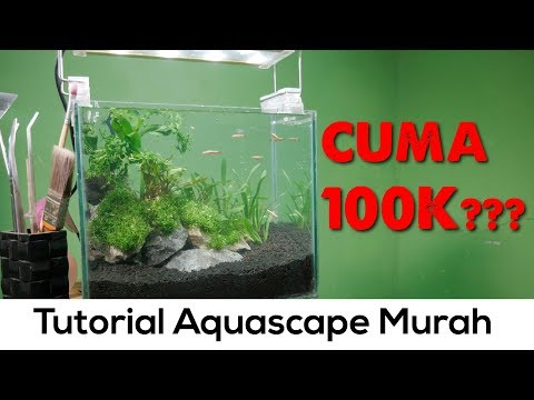 Aquascape Rimbun Tanpa Bikin Dompet Gersang (tutorial Aquascape 30cm Natural) Pojok Tutorial #2
