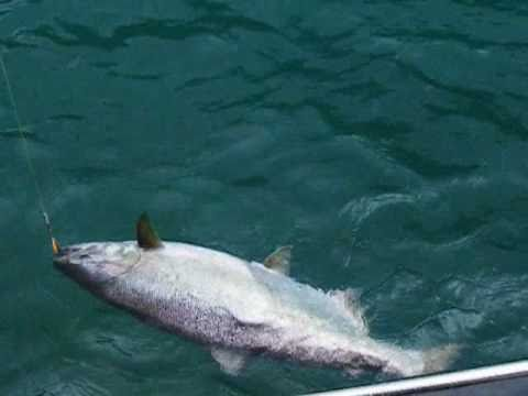 Pesca Salmones Rio Puelo King Salmon