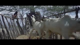 Nonton Film Trailer  Boi Neon   Neon Bull Film Subtitle Indonesia Streaming Movie Download