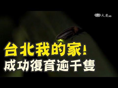 螢火蟲 台北市也有喔