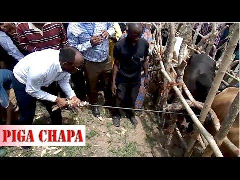 Upigaji Chapa Mifugo Handeni
