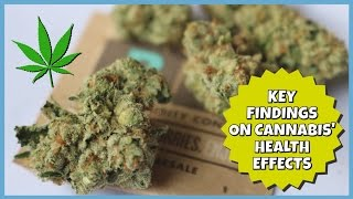 KEY FINDINGS ON CANNABIS' HEALTH EFFECTS   NewsNug recap   CoralReefer by Coral Reefer