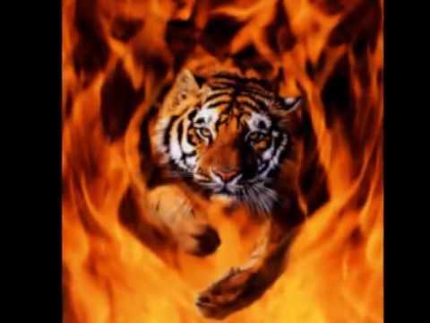 Status profundos - Capitalismo Templo del tigre, Música ilegal