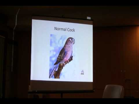 The Bourke's Parrot (Neopsephotus bourkii) + Mutations (ASNSW Presentation)