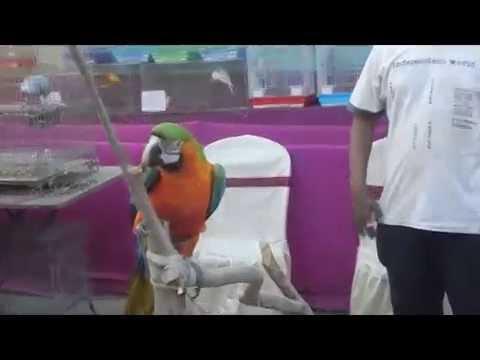 Uttarpara Exotic Birds Exhibition