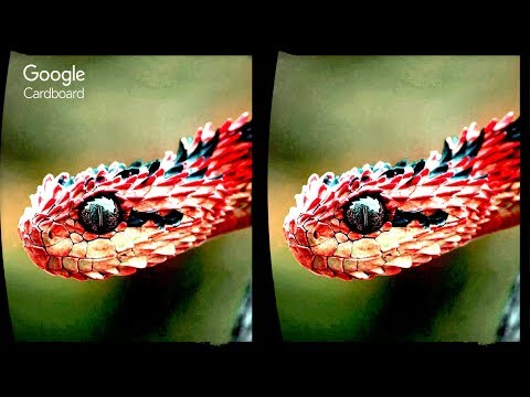 3D Extreme Effects 02 - Aquarium + Snake | 3D Side by Side SBS VR Virtual Reality