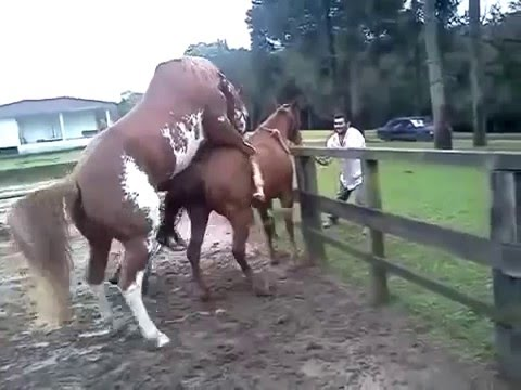 Video Animals mating - Horse Mating & Funny horse compilation 2015 HD Part 15 download in MP3, 3GP, MP4, WEBM, AVI, FLV January 2017