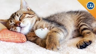 Video Train Your Cat to Let You Sleep MP3, 3GP, MP4, WEBM, AVI, FLV September 2018