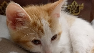 Close Up Kittens 2017-04-09