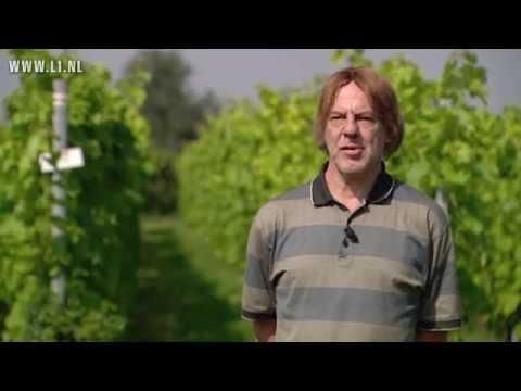 L1 KOPlopers- C2C wijnbouw Greenport Venlo