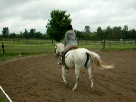 Horseback Riding in Nepean, Ontario, Canada