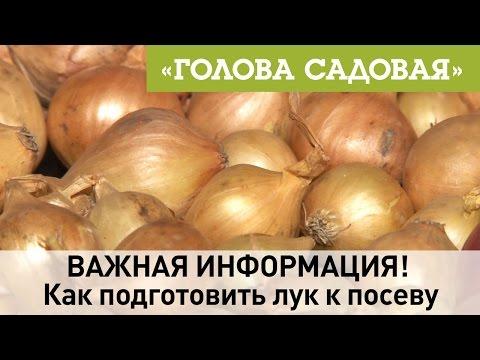 Голова садовая - ВАЖНАЯ ИНФОРМАЦИЯ! Как подготовить лук к посеву Часть 1