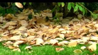 Video Podzim