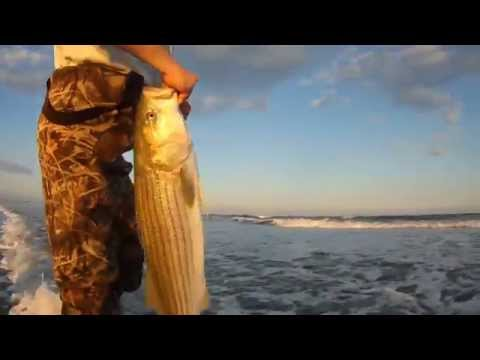 Big Stripers and Black Drum – VA's Eastern Shore