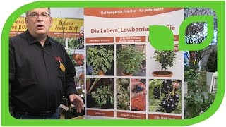 The Lowberry Plant Family from Lubera
