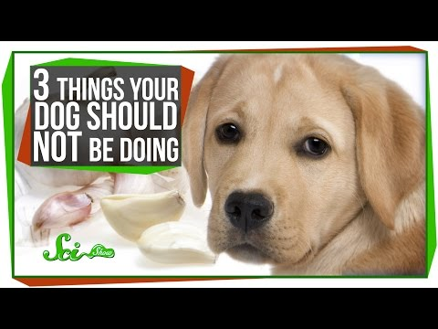 3 Things Your Dog Should Not Be Doing