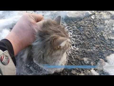 إنقاذ قطٍّ ملتصقٌ بالأرض بسبب الجليد