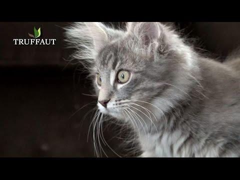 comment prendre soin d'un chaton