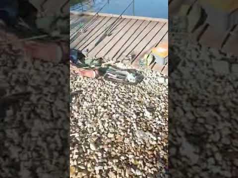 Видеоотчет о рыбалке за 11 октября 2021 г.