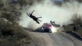 Compilation Crash rally 2014/2015 , #1