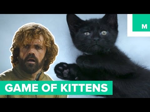 Game of Kittens > Game of Thrones