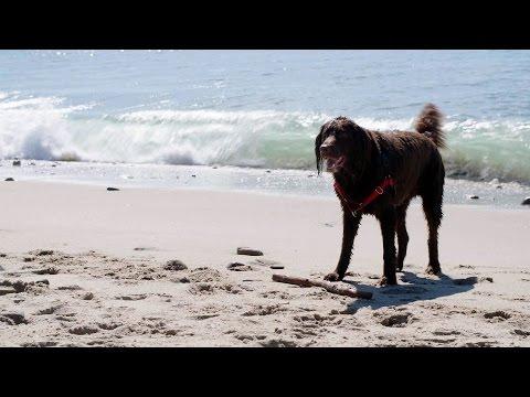 Beverly Hills Dog Show: Tara Lipinski, Johnny Weir share L.A. dog culture