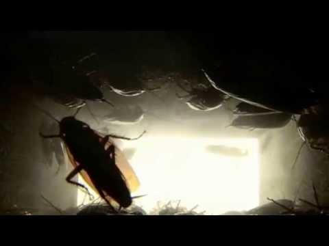 3D Pestcontrol 2014 - Plaga de cucarachas en los falsos techos.