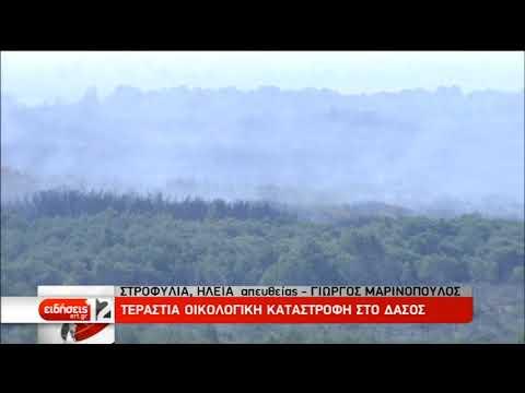 Μεγάλη οικολογική καταστροφή στο δάσος της Στροφυλιάς | 03/04/19 | ΕΡΤ