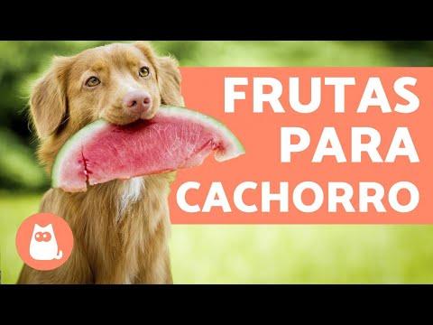 8 Frutas para cachorros e seus benefícios