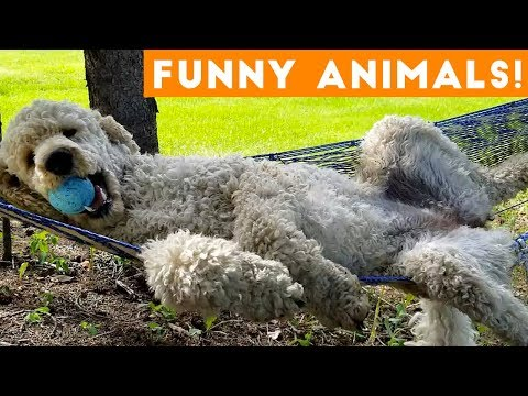Funniest Pets & Animals Of The Week Compilation November 2018 | Funny Pet Videos