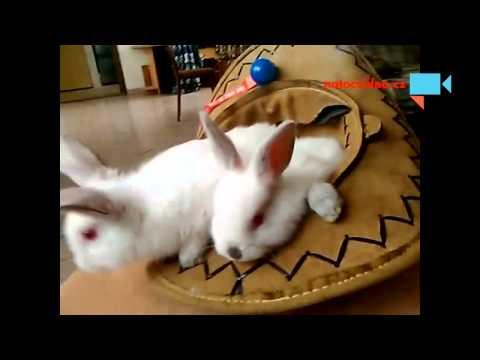 Fandící králíci :)