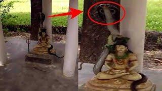 Video Warga Dihebohkan Kemunculan Ular Cobra Bersinar di Patung Dewa Shiwa, Sungguh Aneh !! MP3, 3GP, MP4, WEBM, AVI, FLV Maret 2019