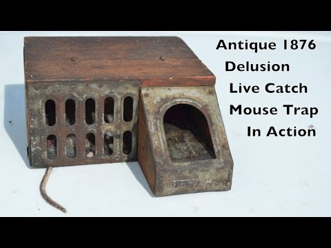 Antique 1876 Delusion Live Catch Mouse Trap In Action. mousetrapmonday (видео)
