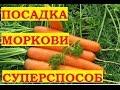 Видео - Посадка моркови. Подготовка семян для быстрого прорастания!