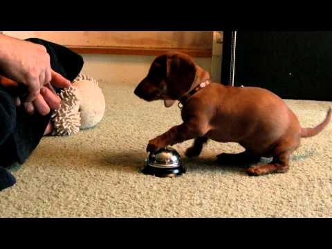 YouTube: esta es la forma más fácil de entrenar a tu cachorro