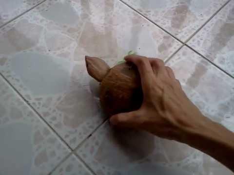 ทำเต่าของเล่นเด็กจากกะลามะพร้าว